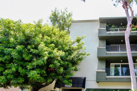Coral Tree brentwood