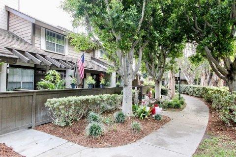 Smoketree Anaheim