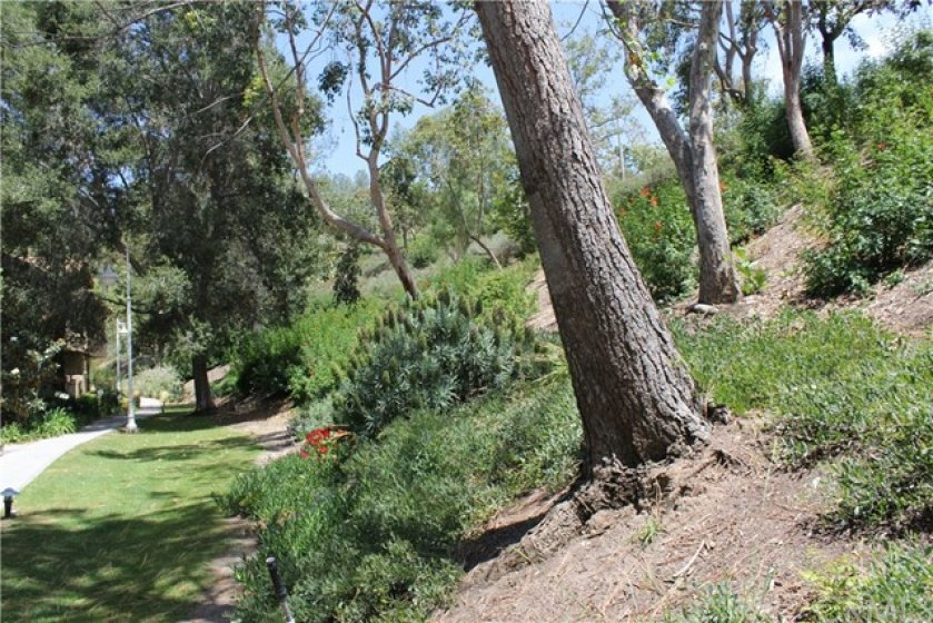 Landscaped slope with lots of trees that provide the right amount of shade.