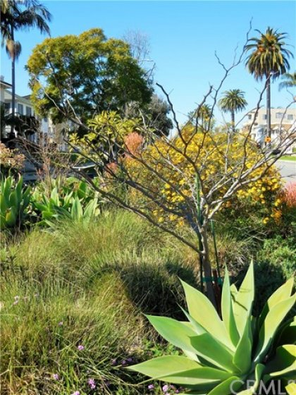 Green space with succulents and spring blooms coming.