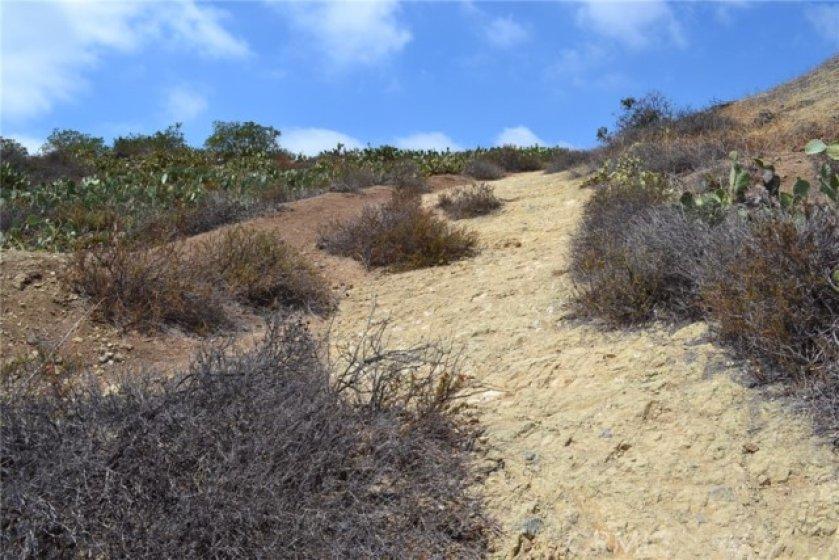 Walking Trail across Cannon