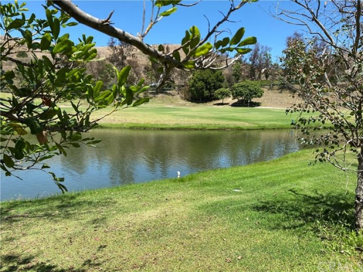 Excellent Lake View - Enjoy The Egrets, Ducks And Turtles!
