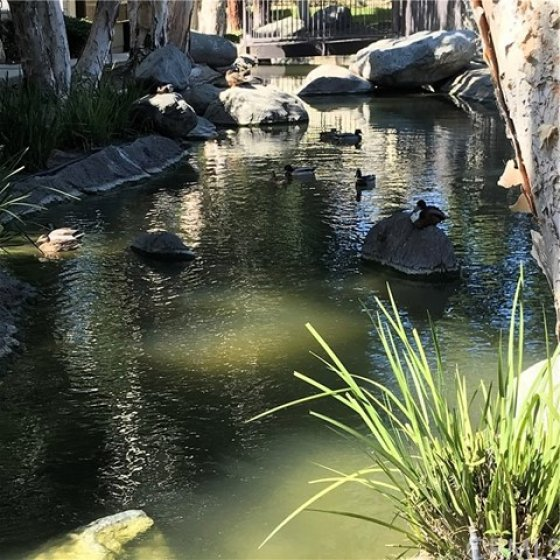 Duck and Turtle Pond