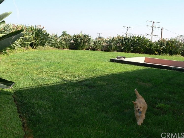 grass area for dogs