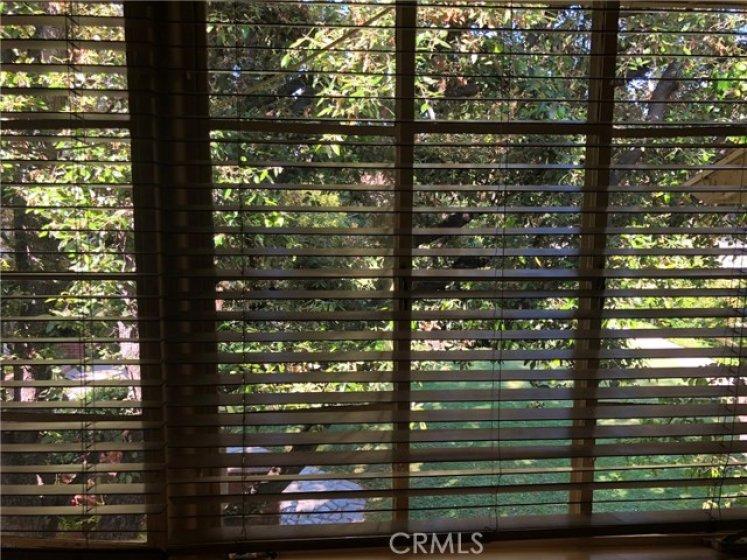 Window View from Bedroom.