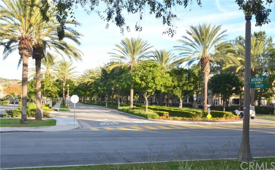 Tree-lined Avendale Blvd with stately palm trees.  Right in front of Avendale Clubhouse (2 min walk from home)