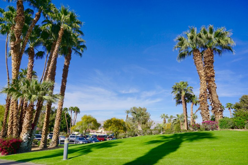 The desert landscape at Indian Palms is impeccably manicured