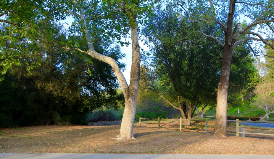 The parklike grounds of Seville in Mission Viejo Ca