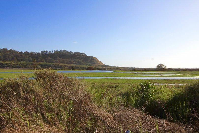 A view of the landscape when reaching Del Mar Terrace Neighborhood