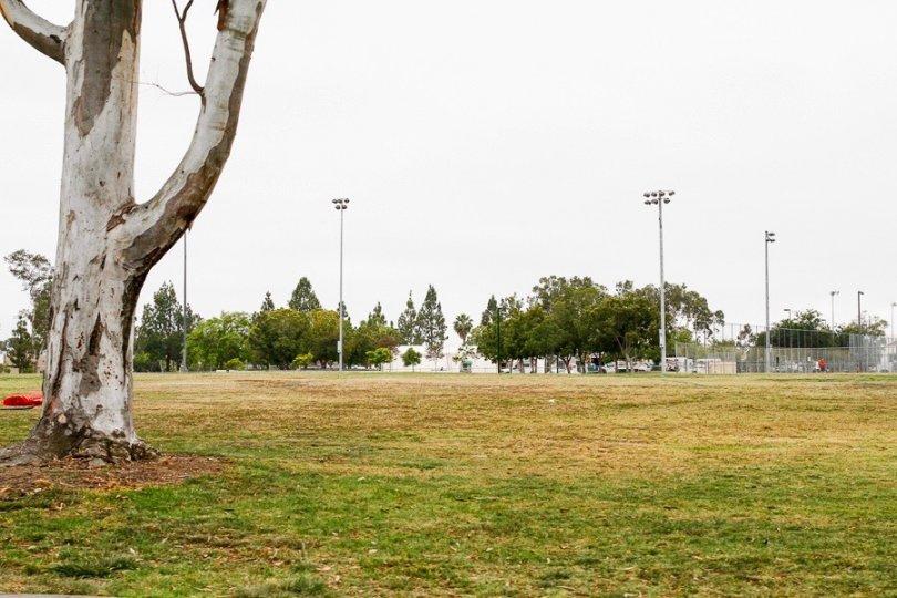 Mira Mesa Park Greens