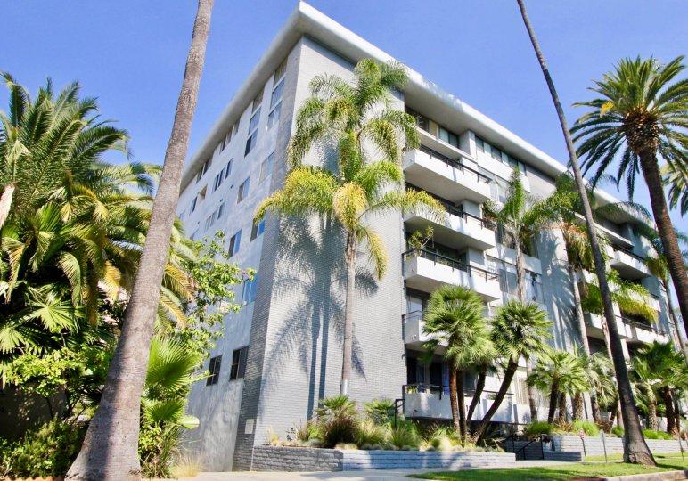 Palm Savoy Beverly Hills