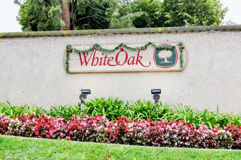 White Oak - Lake Forest CA