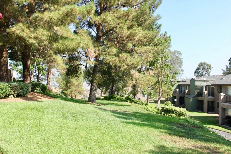 Hillside Tree area nested in the hillside of Crown Villas