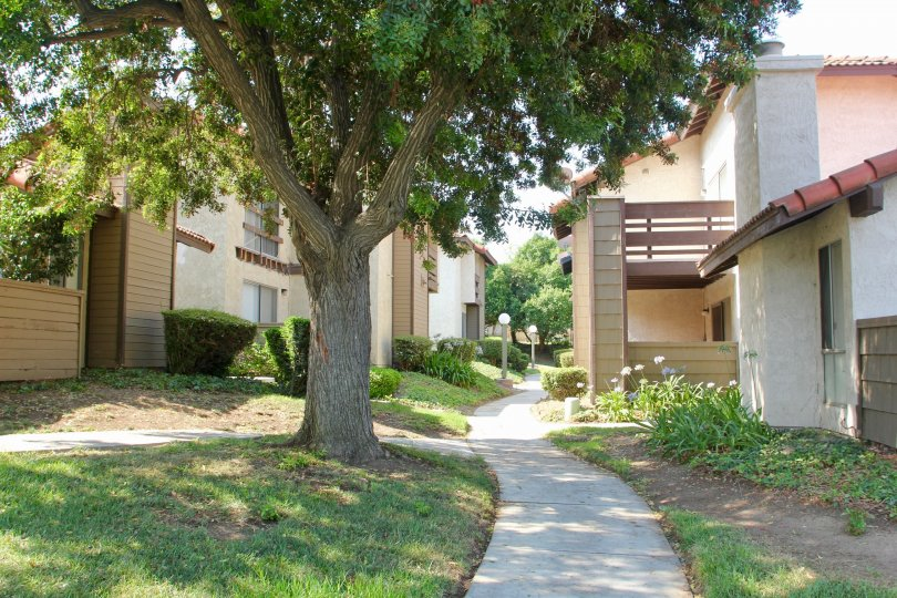 A tree covers a walkway with shade at the Oakview community.