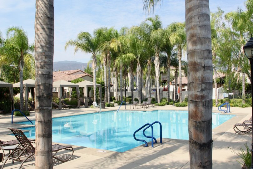 Pool area with covered pool chairs and palm trees with blue railings