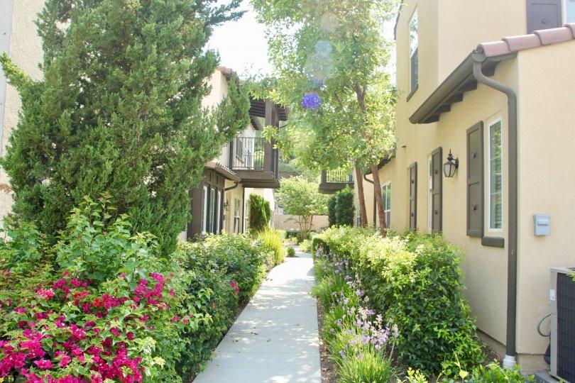 A beautiful gardin between elegant aparments in Shady Grove