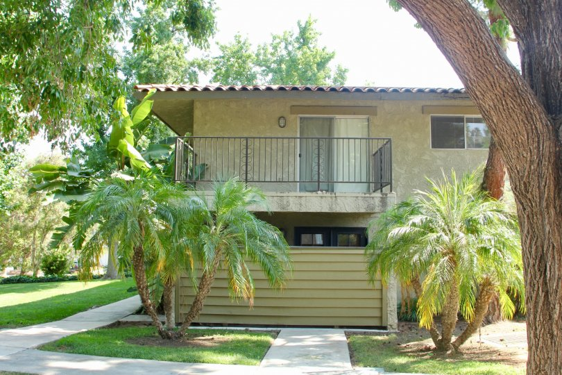 Palm trees green grass and older looking condo at the lakes at corona