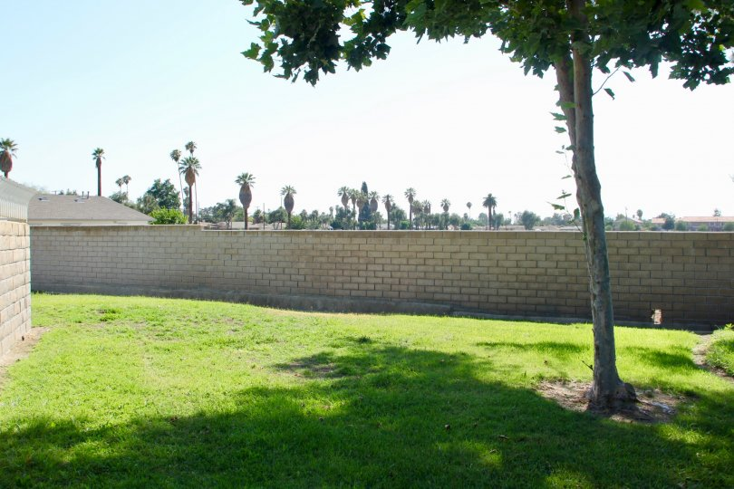 Views of palm trees in the distance at Dartmouth Arbors, California
