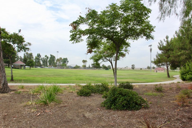 Trees and Bushes in the park at Parkside at Towngate Moreno Valley California