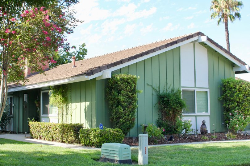 Bouganvillia grow on the lawn of this green and white striped ranch home in Arroyo Viejo