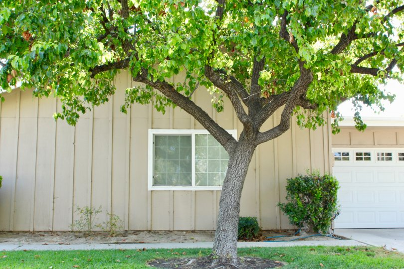 House with garage and shady tree with shrubs and front lawn
