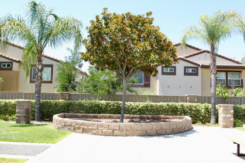 Beautiful park with palm trees in front of apartments in Meadowlane Murrieta