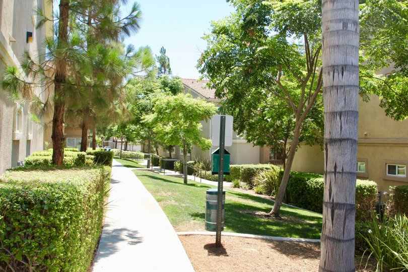 A long side walk surrounded by trees next to large townhomes in Reverses at Madison park.