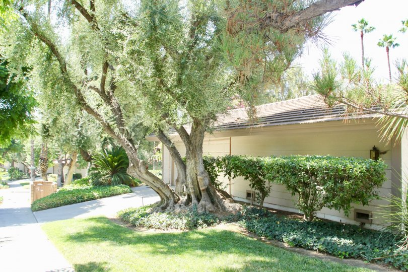 CANYON CREST VILLAS IS IN THE CITY OF RIVERSIDE AND IN THE STATE OF CALIFORNIA