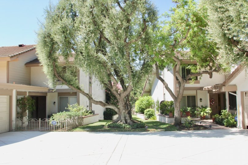 Two-storey traditional houses with a large tree in-between in Canyon Crest Villas community.