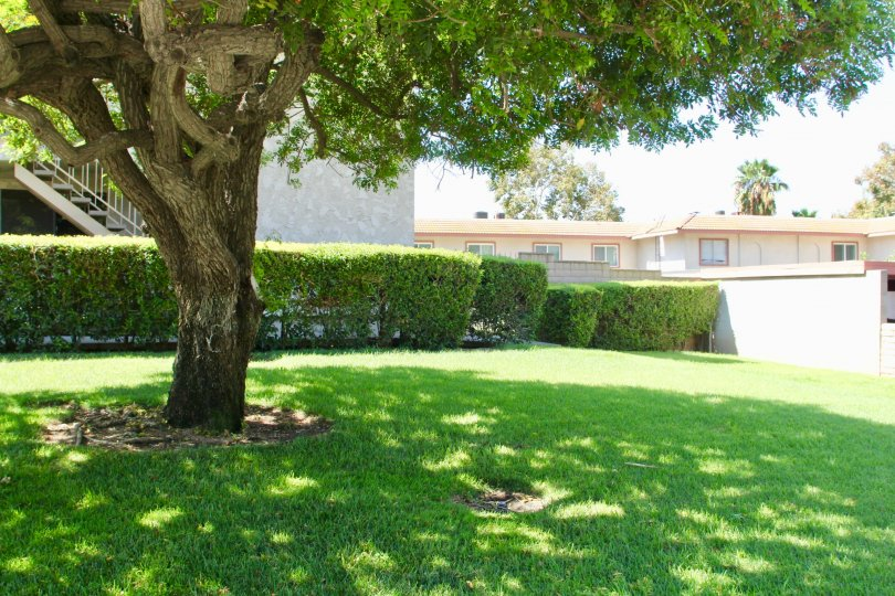 A beautiful sunny day under an oak tree in front of Country Club Villas located in Riverside California.