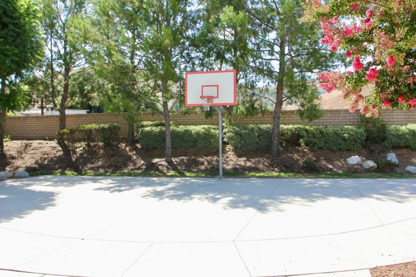 Basketball court surrounded by tall trees, trimmed shrubs and landscaping