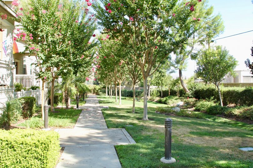 Tree lined path with grassy area and manicured gardens and trimmed hedges