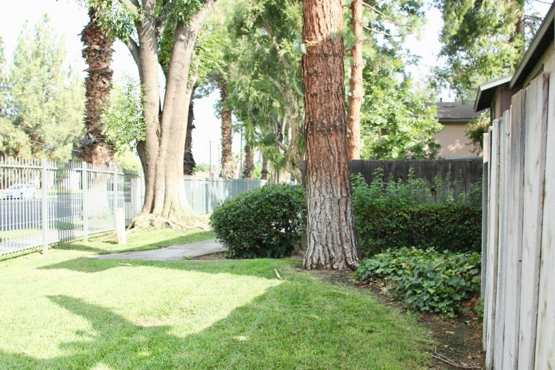 A view of trees at Queen Ann Circle in Riverside, California