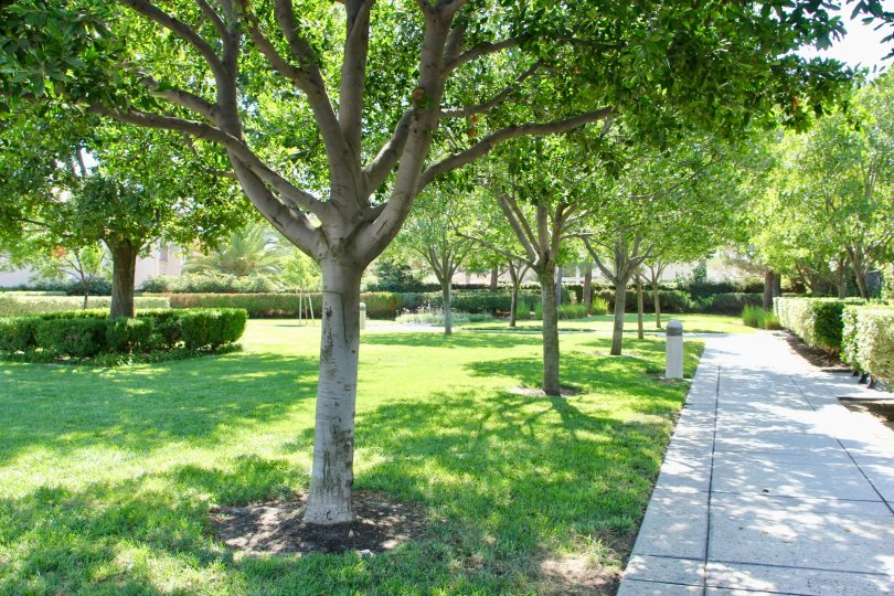 A SUNNY DAY IN THE RIVERWALK PARK AND IT IS GREEN ENVIRONMENT SCENERY