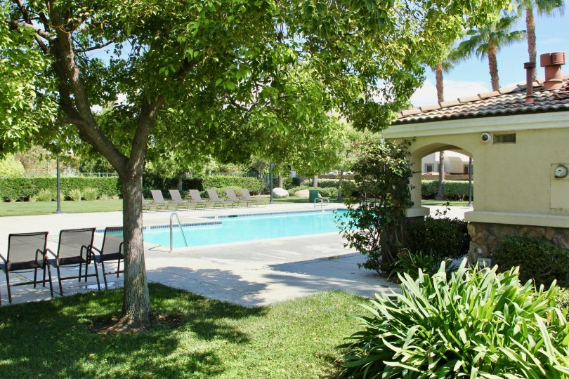 Pool area with cared lawn gardens and trees with shrubs and plenty of sunning chairs