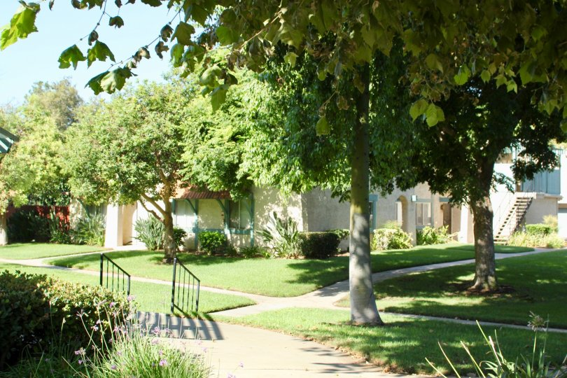 Sunny day outside of University Greens in Riverside, California There are many trees and the landscaping looks up to date.