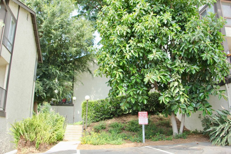 close shot of the greenery at Valle Vista, riverside, California