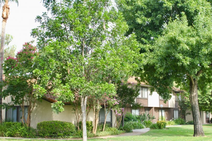 Victoria Village condominiums, surrounded by mature trees, in Riverside, California