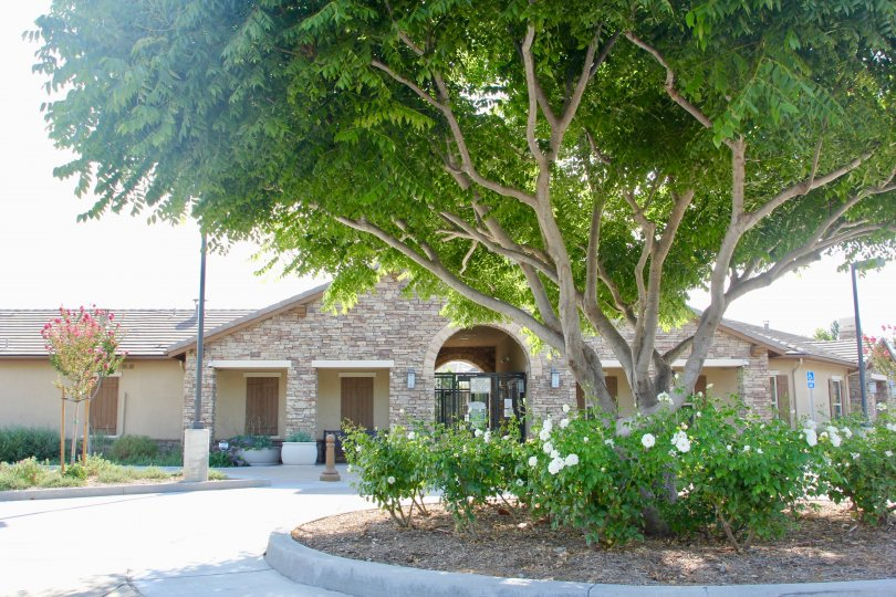 A large tree with green leaves in front of the Hawthorne home in Temecula, CA