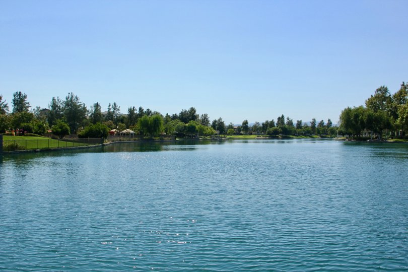 Savannah at Harveston temecula California nice waterspace surrounded by grassy green plants looks heavenly