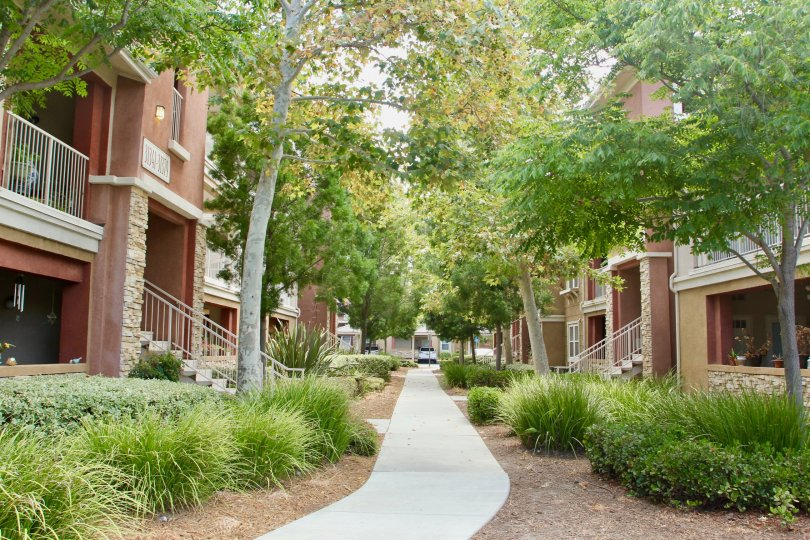 Tree lined pathways to the entrance of your condo trees grass and professional landscaping