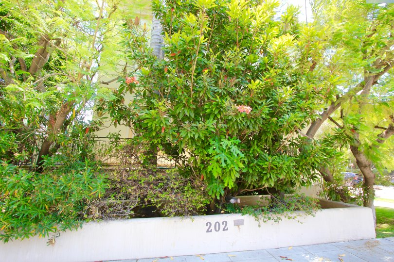 The landscaping seen around Crescent Townhomes in Beverly Hills