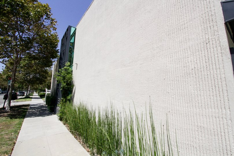 The greenery seen around the walls of McCarty Courtyard