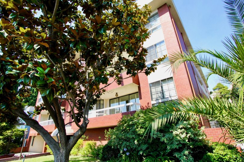 A sunny day in doheny villas of beverly hills the building and the tree should seen beautiful.