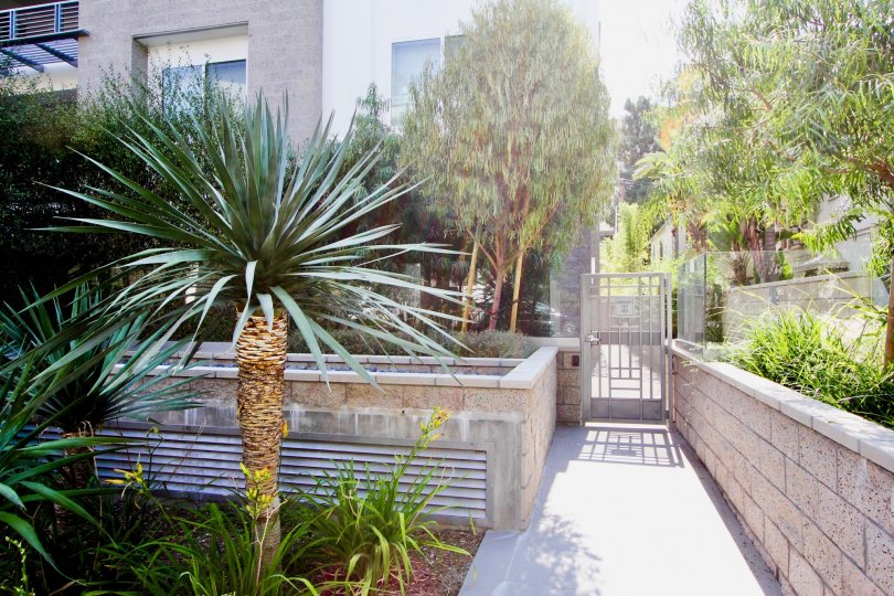 many trees and plants in front of a home in Palm Condominiums