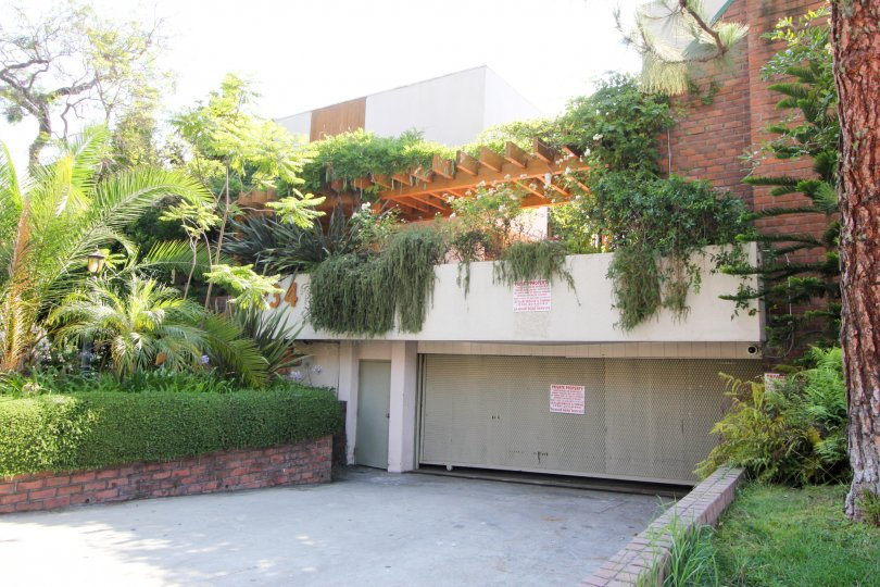 A sunny day at the Tower Park apartment comples with trees and vines all over the building