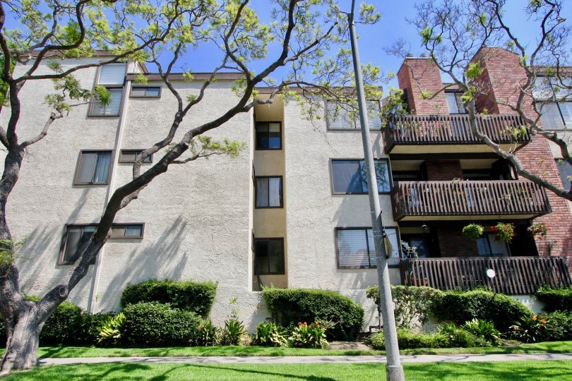 large trees in front of apartments and buildings in California