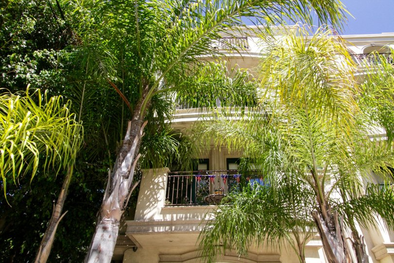 Palm trees provide a scenic view from the Bianchi Villa Condos