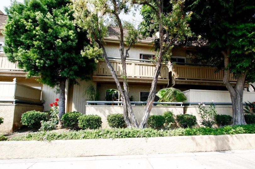 The landscaping around Metrowalk Townhomes in Burbank California