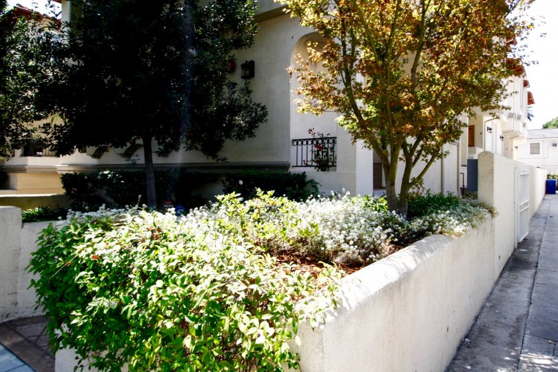 The landscaping around Culver City Gardens in Culver City